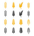black and yellow wheat ears silhouettes vector image vector image