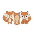 cute foxes animals isolated icon vector image vector image