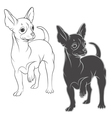 drawing a chihuahua solated objects vector image vector image