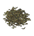 hand drawn pile heap of dry green tea leaves vector image