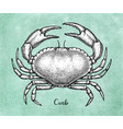 ink sketch of brown edible crab vector image