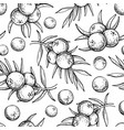 juniper seamless pattern drawing isolated vector image vector image