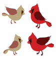 Pair of Northern Cardinals vector image vector image
