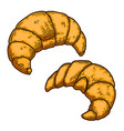 set croissant in engraving style design vector image vector image
