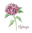 Branch of burgundy hydrangea vector image vector image