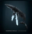 humpback whale under the sea vector image