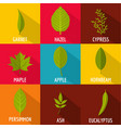 part of the tree icons set flat style vector image