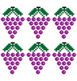 Purple grapes pattern vector image