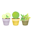 Trees and Plants in Terracotta Flower Pots vector image vector image