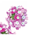 Watercolor Pink flowers bouquet isolated vector image vector image