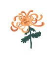 elegant golden chrysanthemum vector image vector image