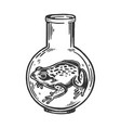 frog animal in laboratory flask engraving vector image vector image