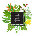 hebs spices in cartoon flat style design vector image