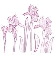 with iris for greeting card vector image vector image
