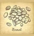 handful of peanut vector image
