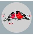 Bullfinches vector image vector image