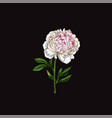 hand drawn gently pink peony flower isolated vector image vector image