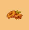 orange slices summer fruit engraved hand drawn vector image