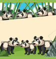 paper background with panda in bamboo forest vector image vector image