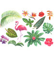 exotic watercolor tropical set vector image
