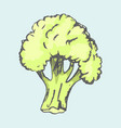 big broccoli plant isolated on blue background vector image