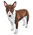 Bull Terrier Dog in black and tan vector image