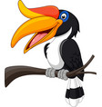 cartoon hornbill bird isolated on white backgroun vector image vector image