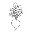 hand drawn black doodle sketch beet vector image vector image
