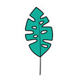 leaf palm tropical on white background vector image vector image