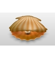 pearl in shell vector image
