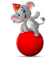 cartoon circus elephant as acrobat vector image vector image