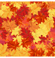 Maple fall vector image vector image