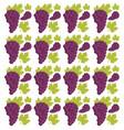 grape seamless pattern design vector image