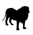 black silhouette of standing lion on white vector image