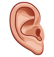 ear on white background vector image vector image