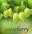 Green juicy sweet gooseberry on a branch for your vector image