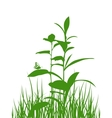 Green meadow herbs silhouettes with butterfly vector image vector image