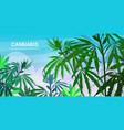 hemp industrial plantation medical cannabis vector image