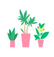 plants in pots interior decor vector image