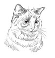 hand drawing cat 5 vector image vector image