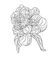 peony flower ink sketch on white background vector image