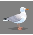 Realistic bird Seagull on a grey background vector image
