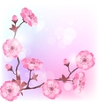 Spring cherry flowers natural background vector image