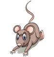 Brown rat vector image vector image