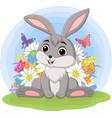 cute barabbit in grass vector image vector image