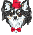 cute hipster dog Chihuahua vector image vector image