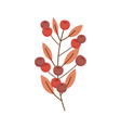 nature branch leaves berries on white background vector image