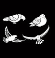 pigeon or dove white bird flying with spread vector image vector image