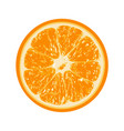 fresh orange isolated on white background vector image vector image
