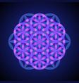 mandala sacred geometry vector image vector image